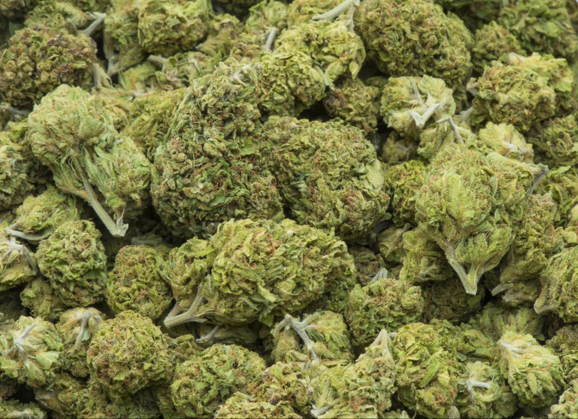 medical uses of marijuana States have legalized medical marijuana because of decisions made by voters or legislators—not because of scientific evidence of its benefits and risks it's challenging to study the health effects of marijuana because of legal restrictions and variability in the concentration of the plant's psychoactive chemicals.